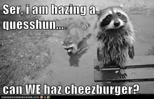 Cheezburger Image 5890174464