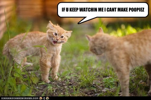 bathroom best of the week cant Cats go Hall of Fame pressure watching weird - 5890355456
