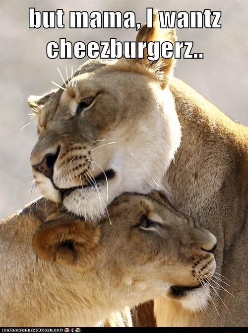 Cheezburger Image 5891266560