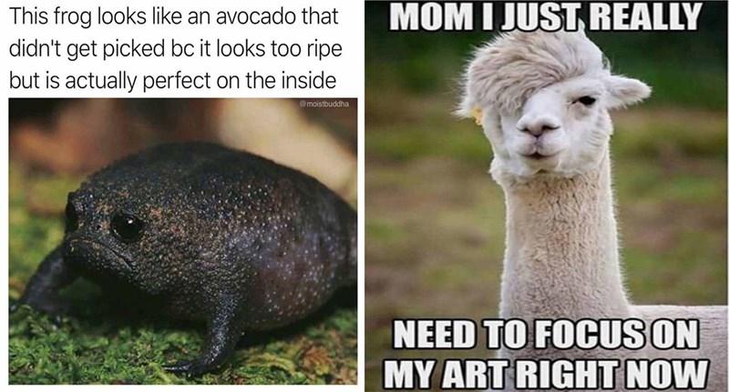 funny memes Memes animal memes animals - 5891333