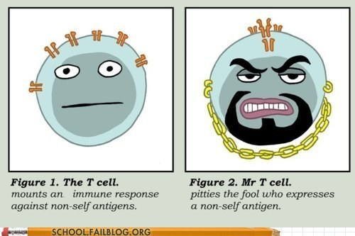 mr t non-self antigen t cell trolling - 5891678464