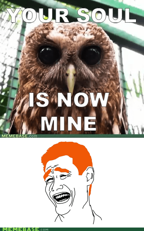 gingers Memes nope Owl soul - 5891689216