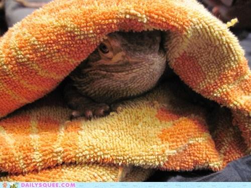 bath bearded dragon lizard pet reader squees towel - 5892205312