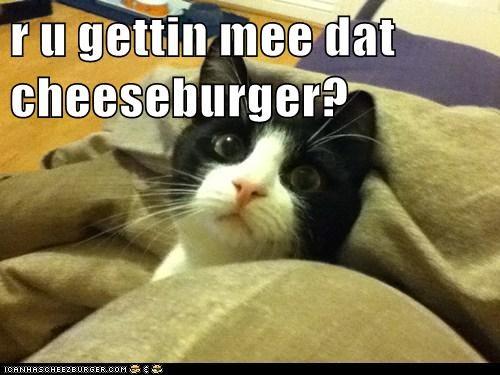 Cheezburger Image 5892635904