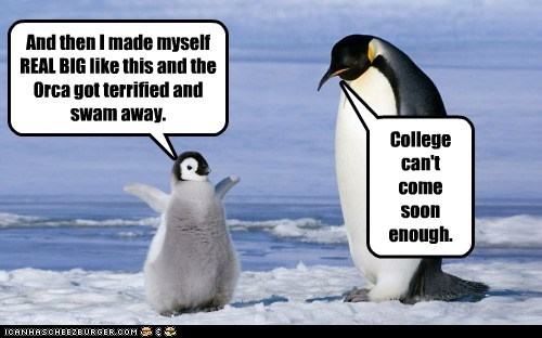 big dreams,child,college,kid,parent,penguin,penguins