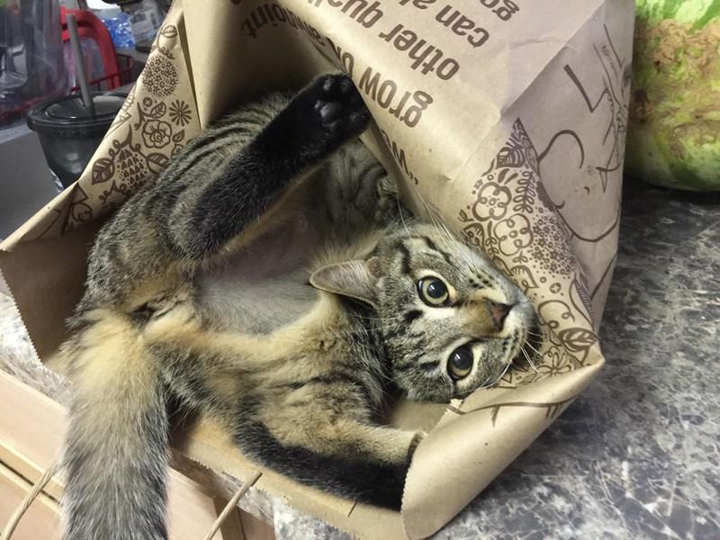 lolcats malfuntioning cute cute cats funny cats Cats funny broken cats - 5893381