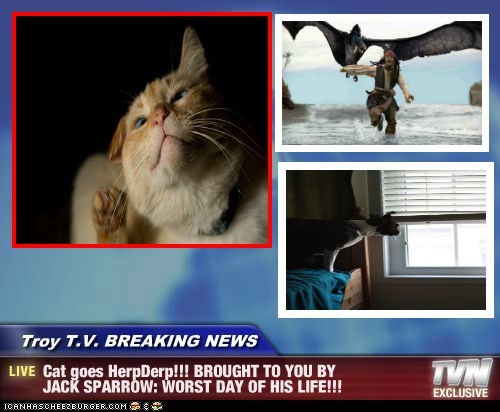 Troy T.V. BREAKING NEWS - Cat goes HerpDerp!!! BROUGHT TO YOU BY JACK SPARROW: WORST DAY OF HIS LIFE!!!