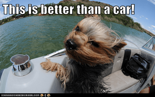 awesome boat Hall of Fame wind wind in your hair yorkie yorkshire terrier - 5893489152