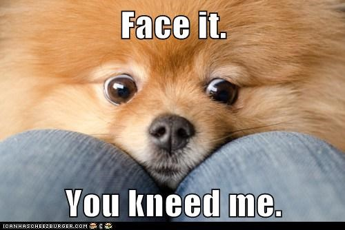 adorable,face it,pomeranian,sweet face,you need me