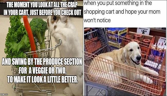 animals riding shopping carts
