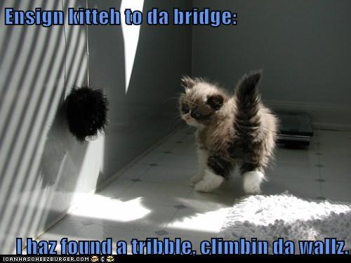 ball bridge climbing communication confused ensign Fluffy found kitten Star Trek TO tribble walls - 5893905920
