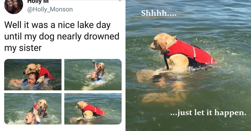 funny dog tries to drown human