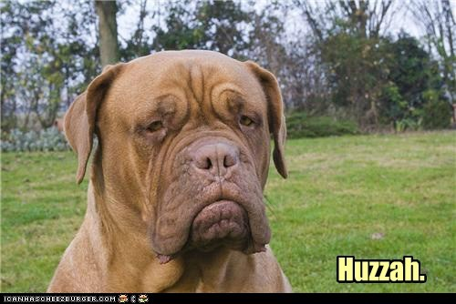 best of the week dogs frown frowning funny Hall of Fame huzzah mastiff mastiffs not happy unhappy
