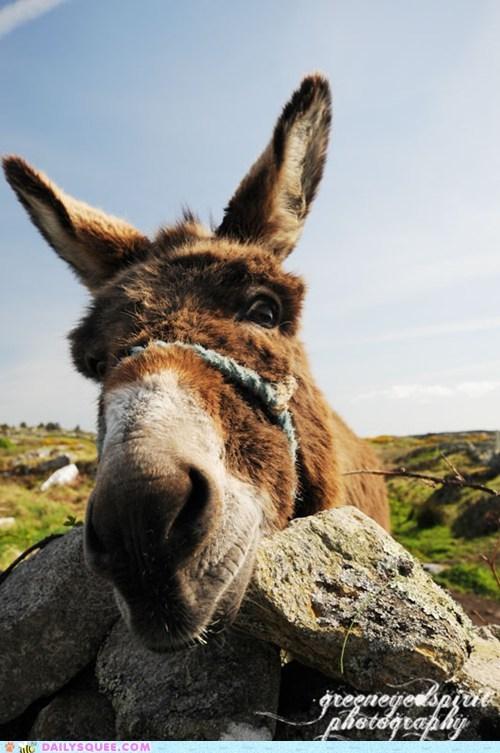 donkey face KISS nose rocks - 5896923904