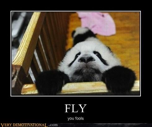 fly fools hilarious panda - 5897373184
