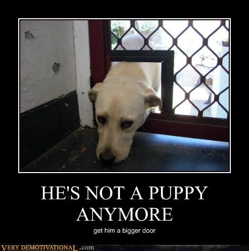 dogs door hilarious puppy wtf - 5898465024