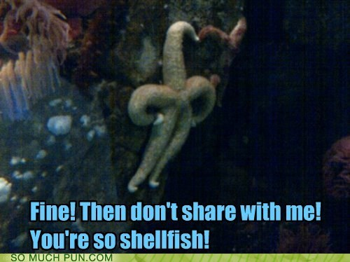 aquatic Hall of Fame ocean selfish sharing shellfish similar sounding starfish underwater - 5899089152