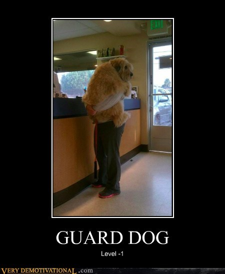 dogs guard hilarious holding scared wtf - 5899215616