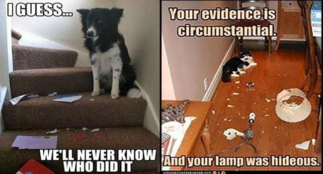 cute memes messes funny memes cute Memes funny dogs lol funny cats Cats funny cat memes - 5899525