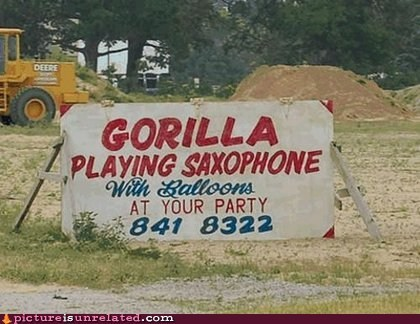 gorilla,Party,saxophone,wtf