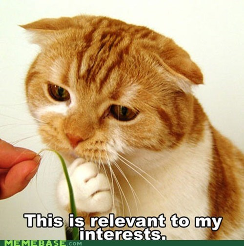 Cats grass Memes relevant - 5900148992