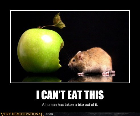 bite eat hilarious mouse