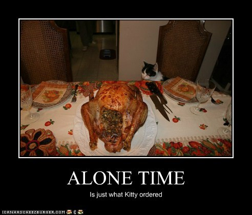 ALONE TIME Is just what Kitty ordered
