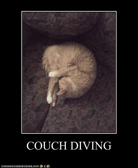 couch dive diving position sleeping tabby tuck - 5901115136
