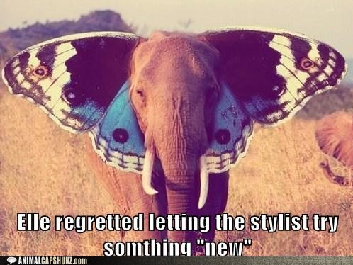 butterfly,caption contest,ears,elephant,stylist