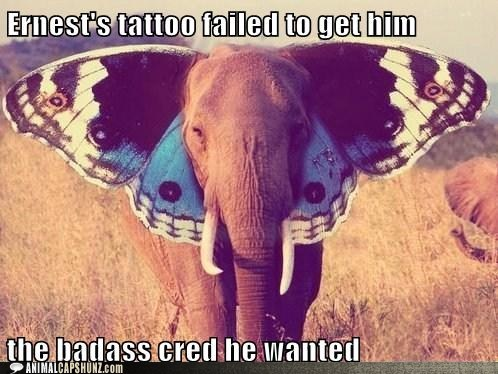 basass,butterfly,caption contest,ears,elephant,street cred,tattoo