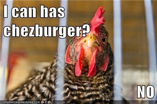 Cheezburger Image 5901893376