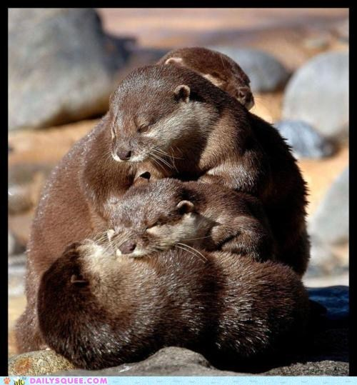 nap,otters,pile,river otters,rocks,sleep