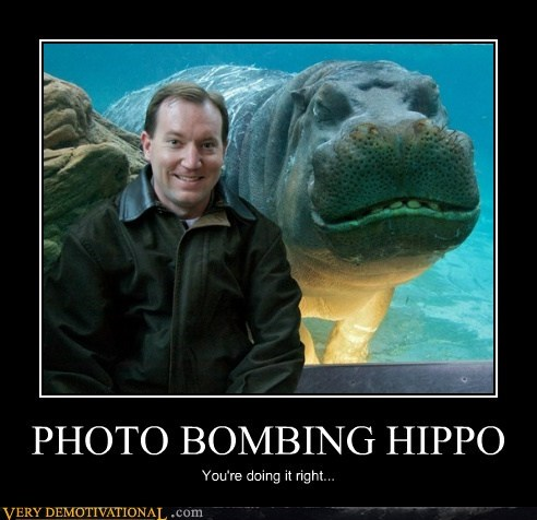 creepy hilarious hippo photobomb wtf - 5901939456