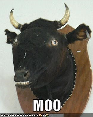 best of week,Chuck Testa,cow,derp,moo,taxidermy