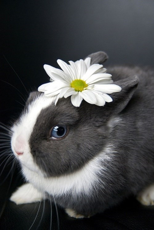 90s,blossom,Bunday,bunny,daisy,fashion,Flower