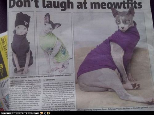 cat fashion,Cats,fashion,hairless,laugh,meowtfits,nekkid,news,newspapers,outfits,sweaters,wtf