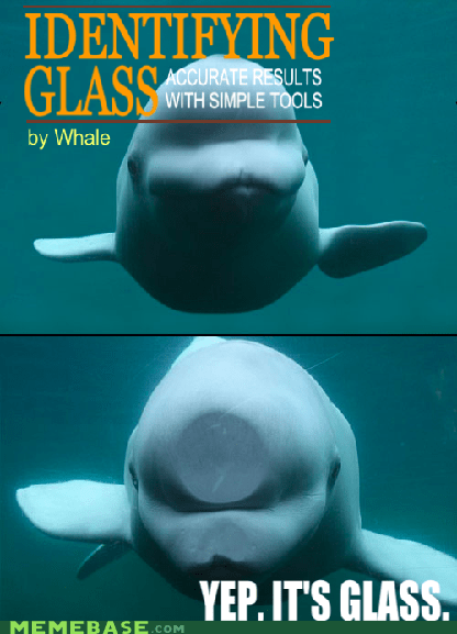 accurate glass whale - 5902448384
