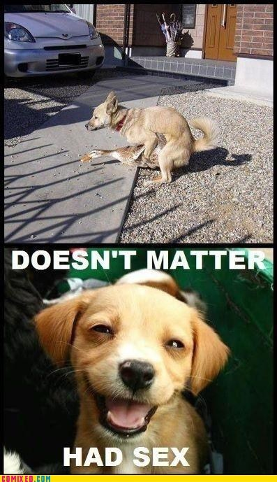 animals doesnt matter had sex dogs hump - 5902452992
