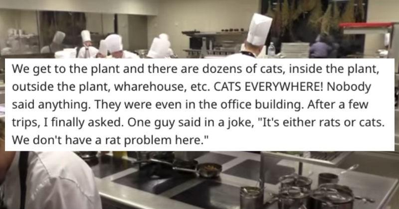 job gross wierd health inspector restaurant story funny service industry - 5902597