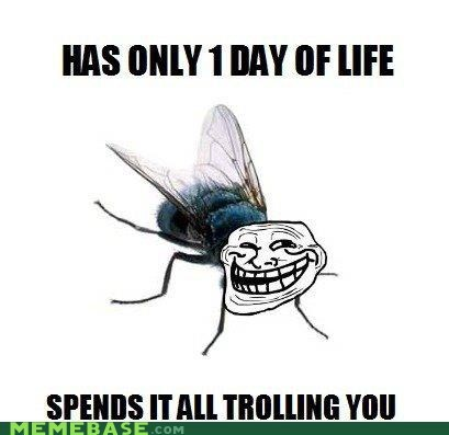 day,fly,life,troll face,troll of the world