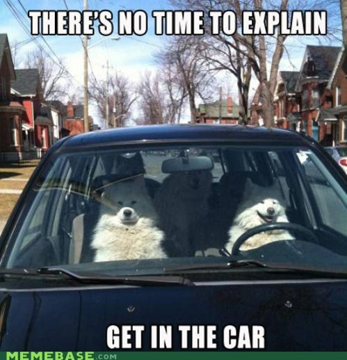 car,dogs,get in the car,hobgoblins,Memes,no time to explain