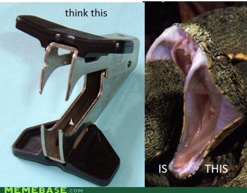 How People View Me snakes stapler remover Terrifying think - 5902725888