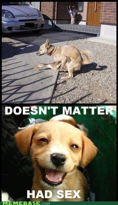 dogs,duck,Memes,puns,sex
