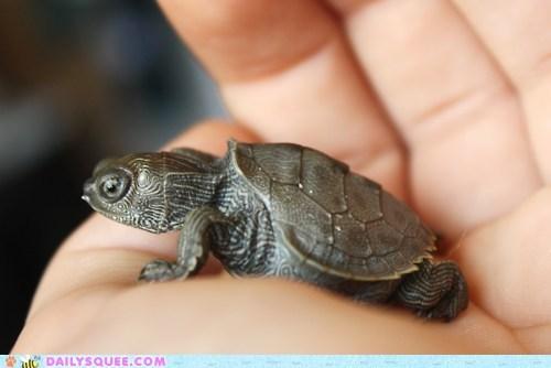 hand tiny turtle
