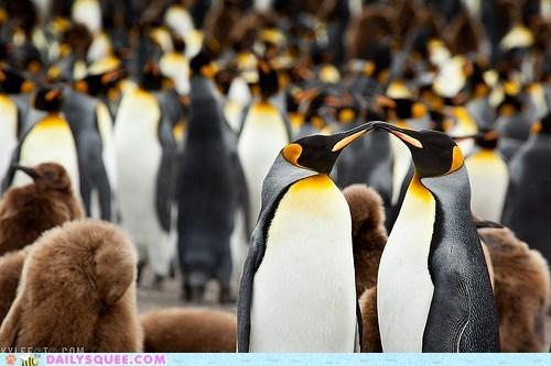couple emperor penguin KISS pair penguins - 5902765568