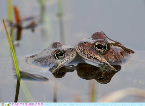 frogs,KISS,prince,water