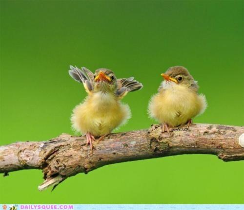 birds branch chicks Fluffy fly wings - 5902772736