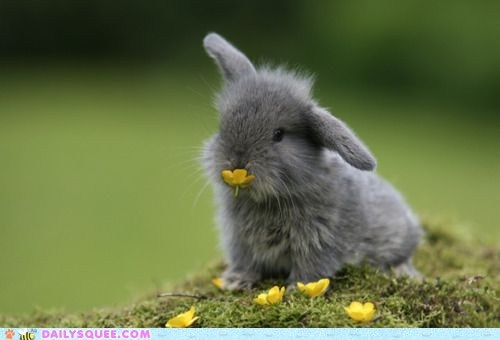 baby Bunday bunny cute flowers squee - 5902776064