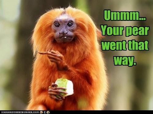 food fruit monkey pear that way - 5902778112