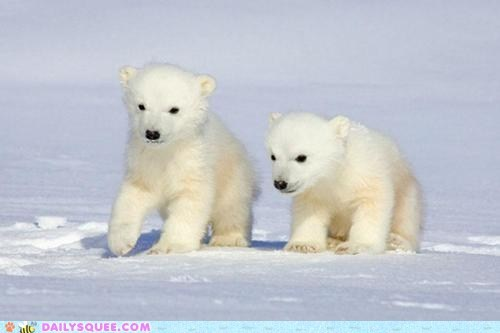 Babies,blend,cubs,polar bears,snow,white